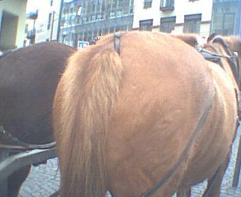 pferdearsch.jpg